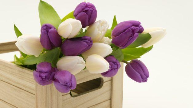 http://zoz.wodzislaw.pl/wp-content/uploads/2018/05/tulipany-628x353.jpg