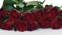 http://zoz.wodzislaw.pl/wp-content/uploads/2018/10/roses-1473682_960_720-213x120.jpg