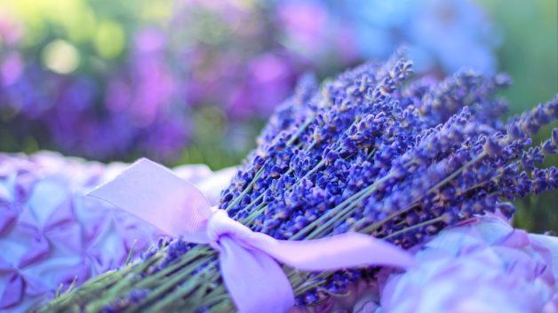 http://zoz.wodzislaw.pl/wp-content/uploads/2019/04/lavender-2482374_1920-628x353.jpg