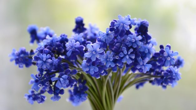 http://zoz.wodzislaw.pl/wp-content/uploads/2019/05/kwiaty-628x353.jpg